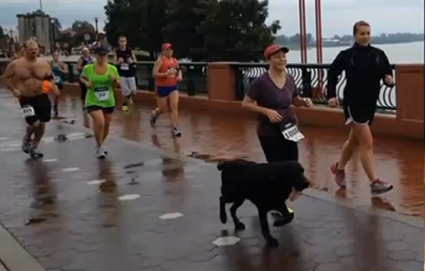 Boogie the Lab Joins a Half-Marathon, and Gets a Medal