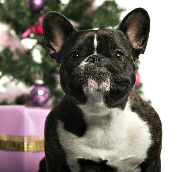 10 Holiday-Related Dog Names