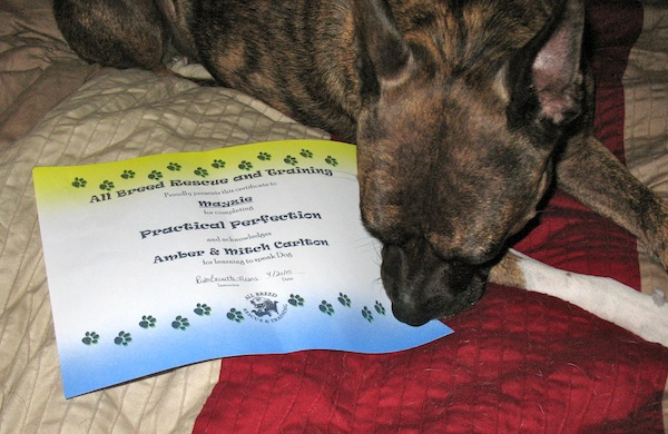4 Things I Love About the Positive Training Method for Dogs