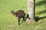 The Grass Can Be Greener: Dog Pee as Natural Lawn Care