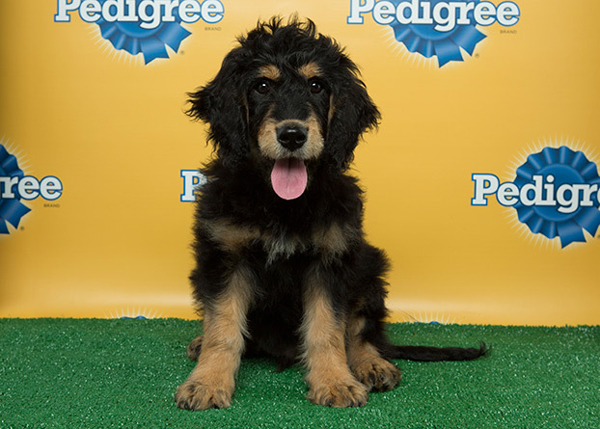 Some Puppy Bowl Competitors Come from a Pennsylvania Kennel That's Facing Charges