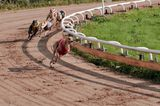 Yet Another Reminder That Greyhound Racing is the Worst