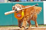 The Best Dog Names Inspired by Major League Baseball