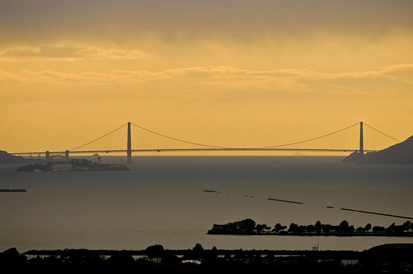 All in a Day's Commute: Man Saves Dog He Found in S.F. Bay