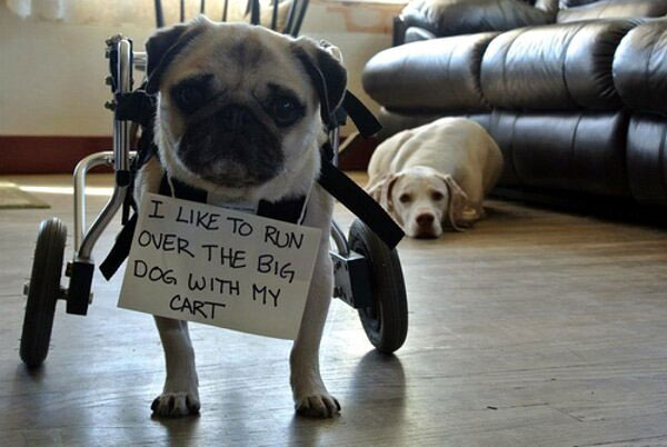 A New Gallery of Dog-Shaming Photos Has More Hounds Confessing to the Unthinkable