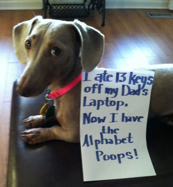 A New Gallery of Dog-Shaming Photos Has More Hounds