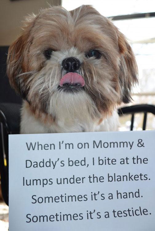 dog-shaming-33.jpg