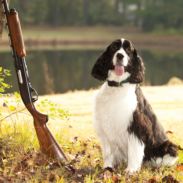 Not a Headline We Write Every Day: Dog Misses Duck, Shoots Hunter
