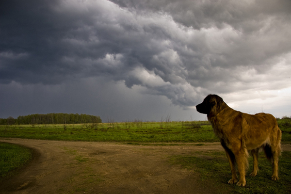 What Do You Do During a Tornado When Your Dog Is Barred from the Storm Shelter?