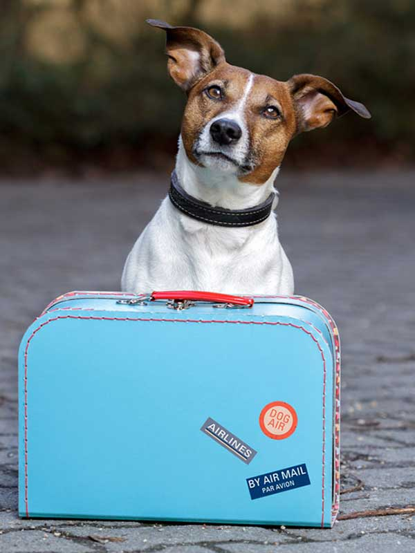 What you need to know for traveling with your dog by plane for Airlines that allow dogs in cabin