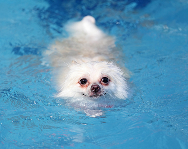 Study: The Dog Paddle Is Just Underwater Jogging