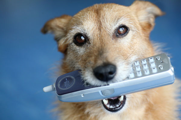 The Heavy Breathing on the Phone Turns Out to Be … a Dog