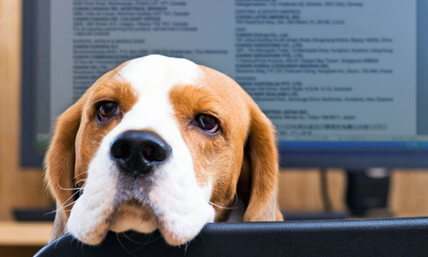 How to Land a Job at a Dog-Friendly Workplace