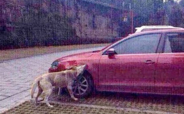 Doggie Vengeance in China: Man Kicks Dog, Pack Attacks Car