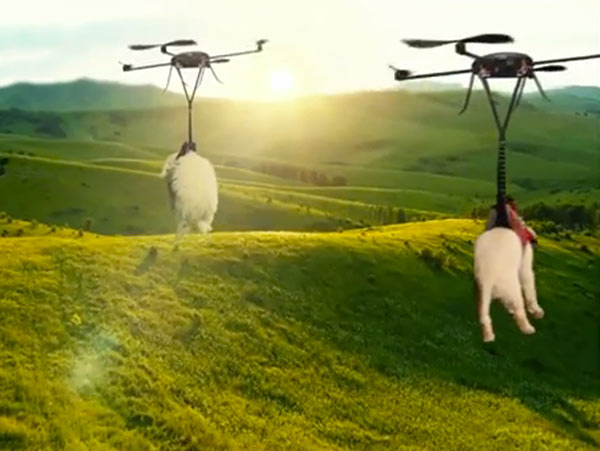 dogs-by-drone-video-06