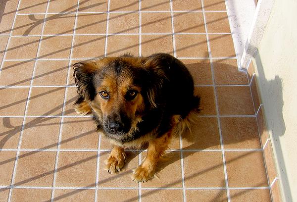 Dog sitting in the sun on a tile floor.