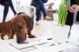 Dogs Dine at a High-End, Organic Pop-Up Restaurant in London