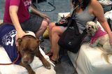 Editor's Picks: The Best and Worst Things We Saw at SuperZoo 2014