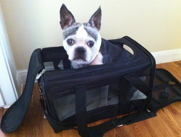 Win A Sherpa Dog Carrier Approved For Air Travel