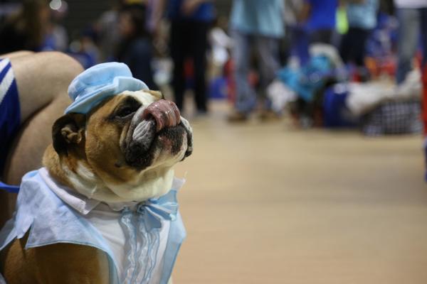 drake-bulldog-contest-11