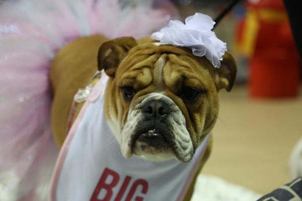 drake-bulldog-contest-12