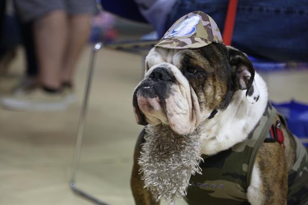 drake-bulldog-contest-13