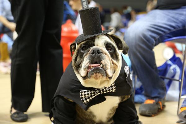 drake-bulldog-contest-15