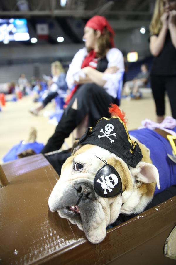 drake-bulldog-contest-17_0