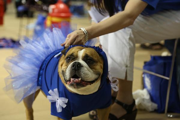 drake-bulldog-contest-9