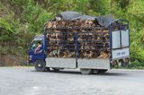 Reality Check: Demand for Dog Meat Increases in Vietnam