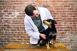 Ask a Vet: How Can I Recognize and Deal With Collapsing Trachea?