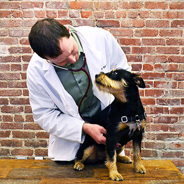Ask a Vet: What's the Most Common Way a Dog Can Get a Knee Injury?