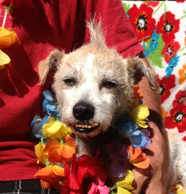 Animal Rescue Hawaii Big Island