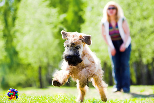 5 Ways to Exercise Your Dog When You Can't Go on a Walk