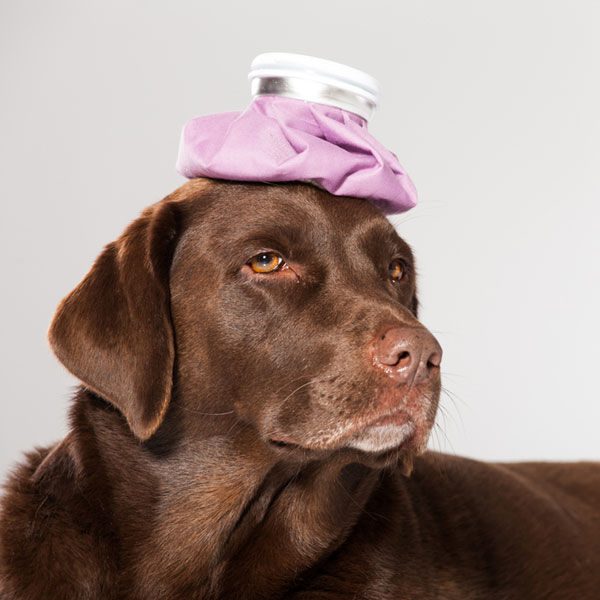 15 Must-Have Items for Your Dog First Aid Kit