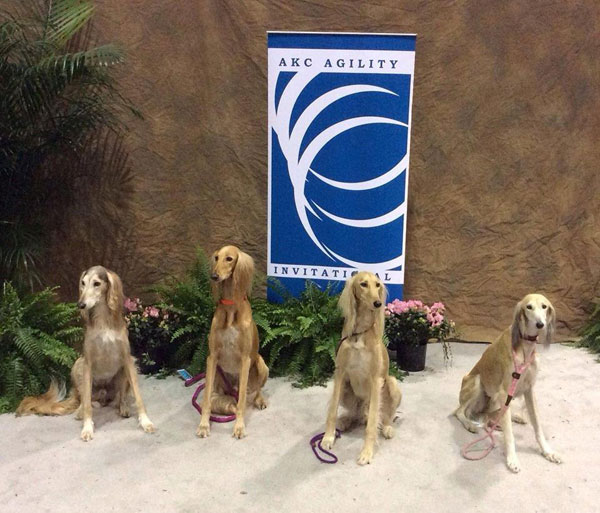 What It's Like to Compete in the AKC National Agility