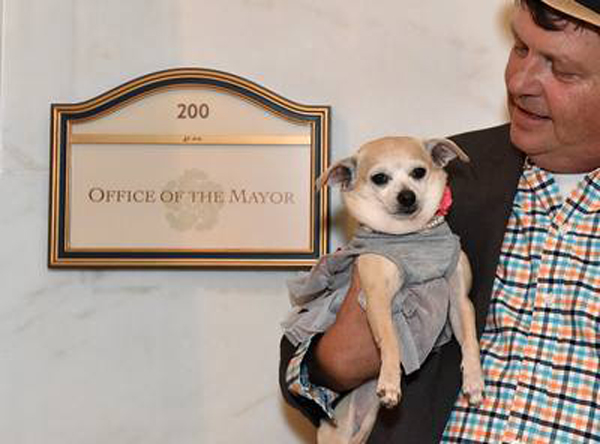 A Chihuahua Was Mayor of San Francisco Yesterday!