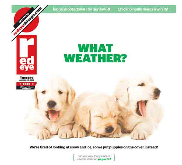 Chicago's RedEye Newspaper Puts Puppies on the Front Page