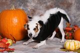 3 Ways Dog Halloween Costumes Can Cross the Line