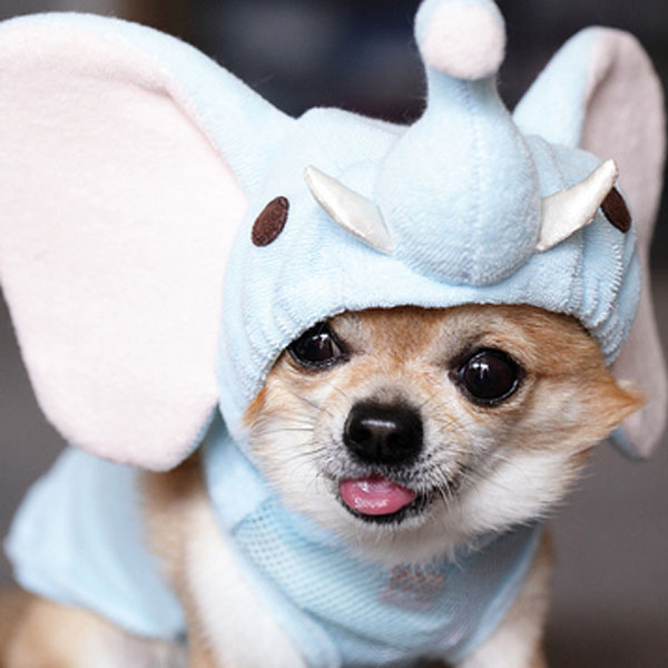 Dogs dressed as other animals! & And Now 11 Crazy Pictures of Dogs in Costumes