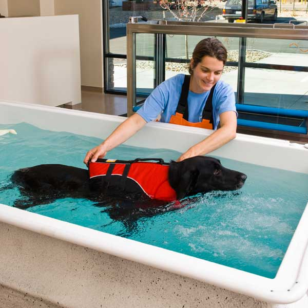 Physical Teams Give Us Problems: How Hydrotherapy For Dogs Works And Why It's Worth It