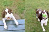 Watch Kellar the Blind Dog Play Fetch Like a Pro