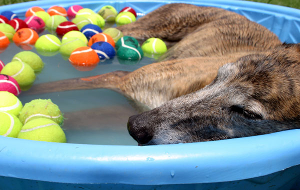 Swimming Lessons: 11 Tips for Teaching Your Pup the Dog Paddle