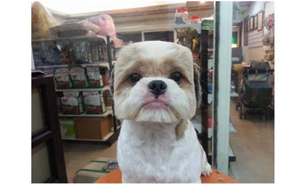 grooming-taiwan-2