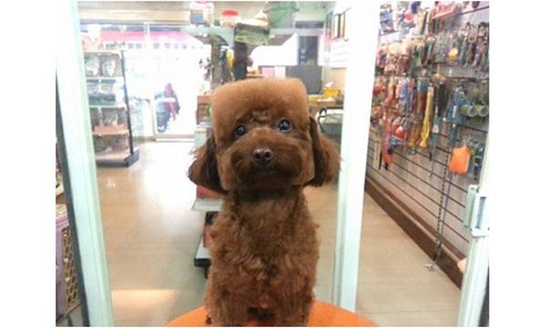 grooming-taiwan-3