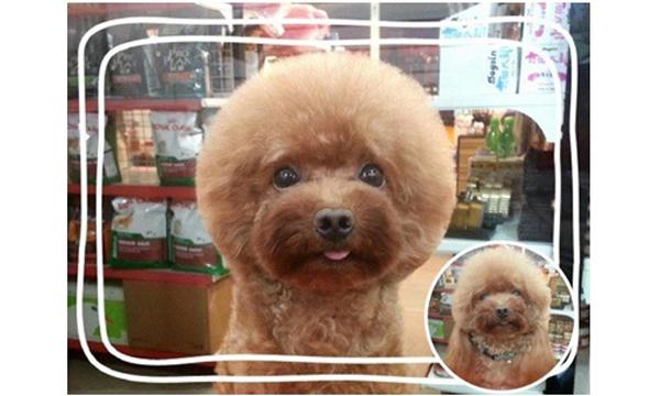 grooming-taiwan-4