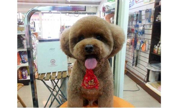 grooming-taiwan-6