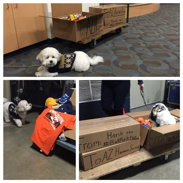 Hank the Ballpark Pup Will Skip Spring Training This Year
