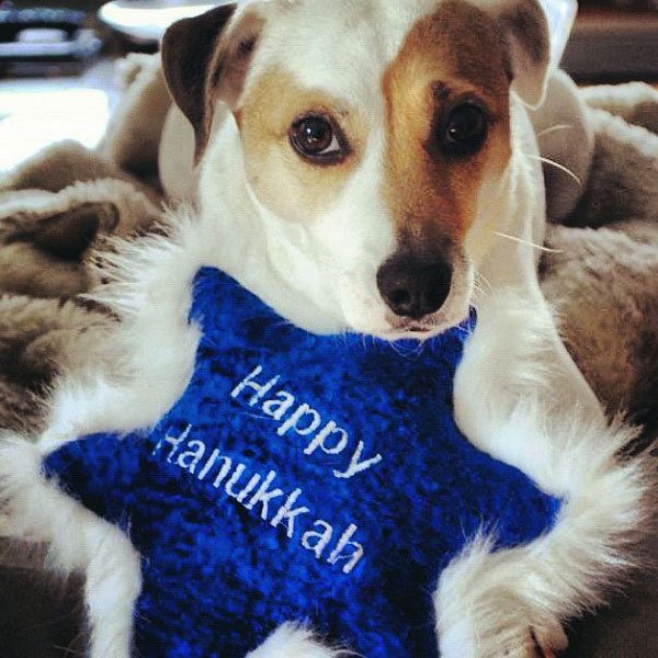 How to Have a Safe and Happy Hanukkah With Your Dogs