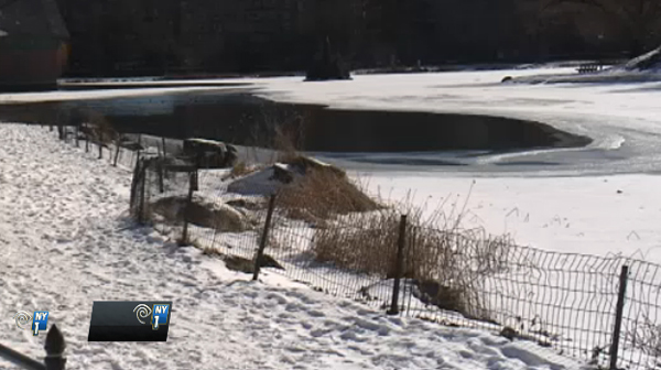 THIS Is Dedication: Professional Dog Walker Plunges Through Ice in Central Park to Save a Dog